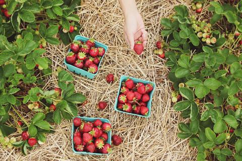 Diferencias entre alimentos orgánicos y normales