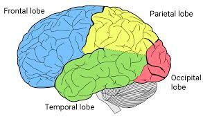 Diagrama lóbulos