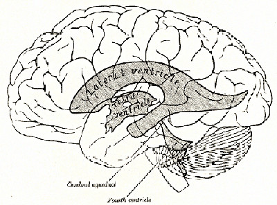 Tercer ventrículo diencéfalo