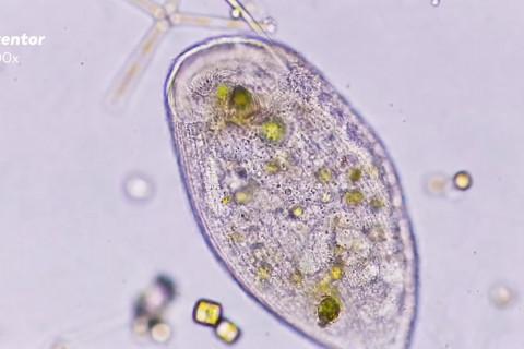 tipos de microorganismos