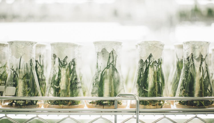 Tipos de biólogo - Botánico