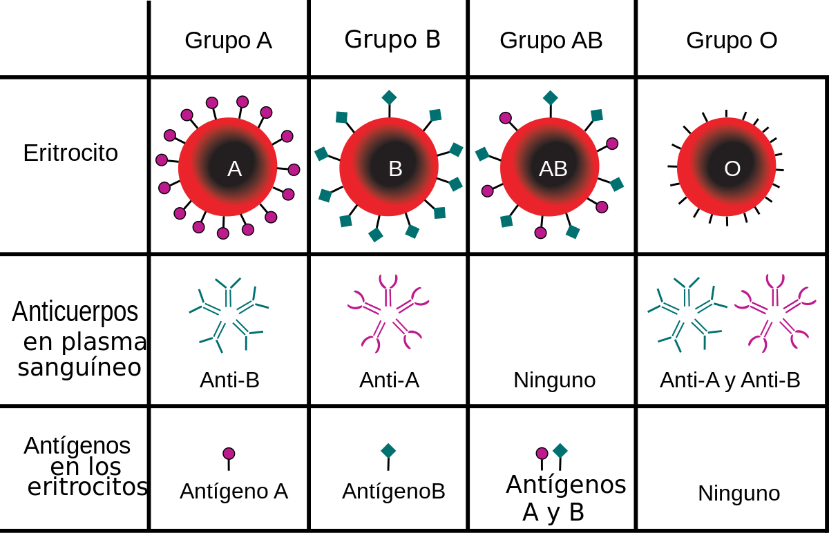 Tabla de compatibilidad grupos sanguíneos