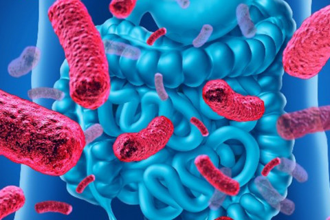 Microbiota tipos