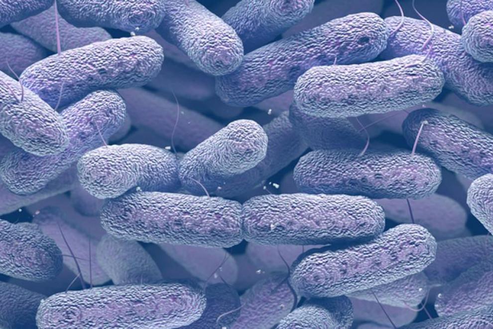 Bacterias resistentes a los antibióticos