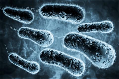 Diferencias microbio bacteria