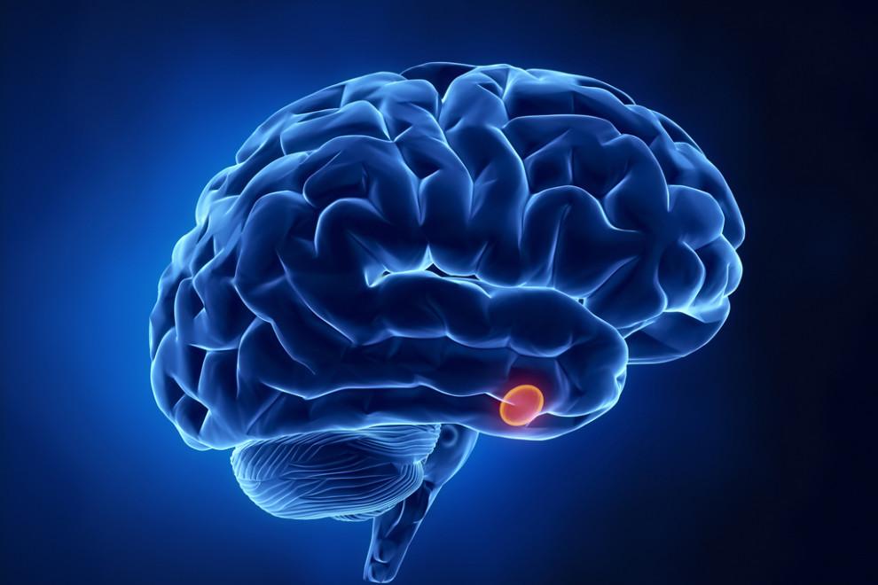 Hipófisis glándula pituitaria