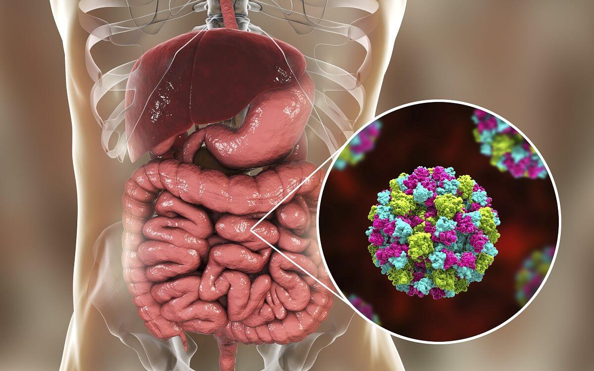 Enfermedades transmisión alimentaria