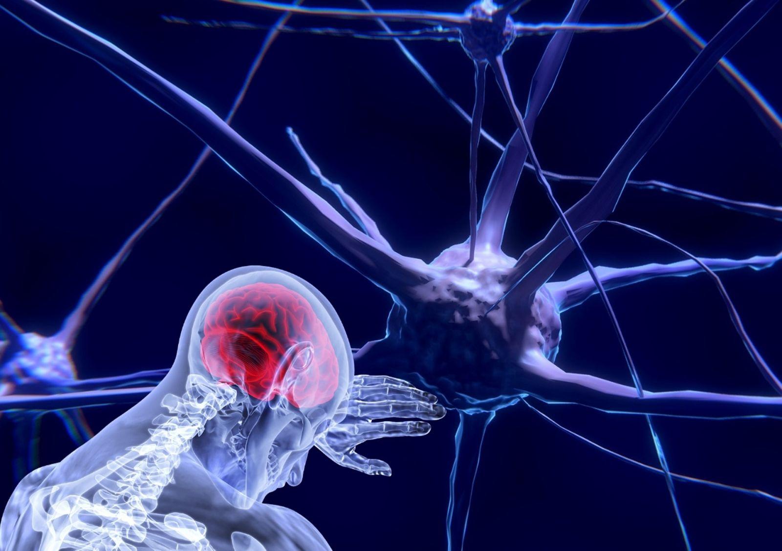 Estrés cerebro