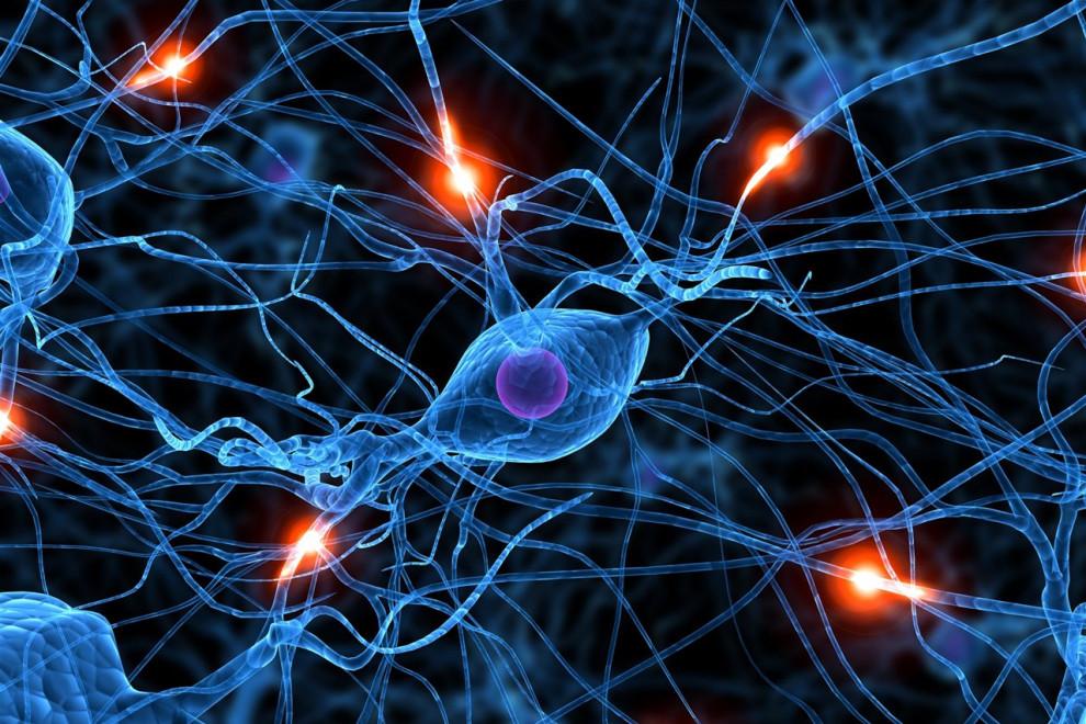 Sinapsis qué es