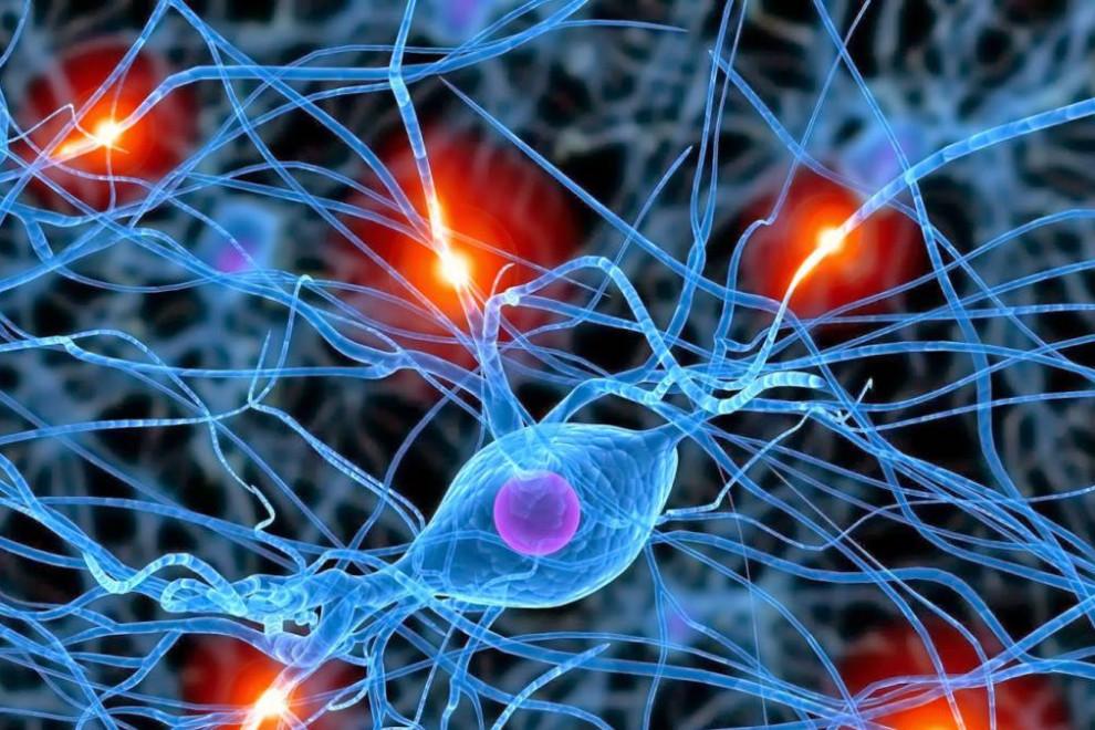 Dendritas neuronas funciones