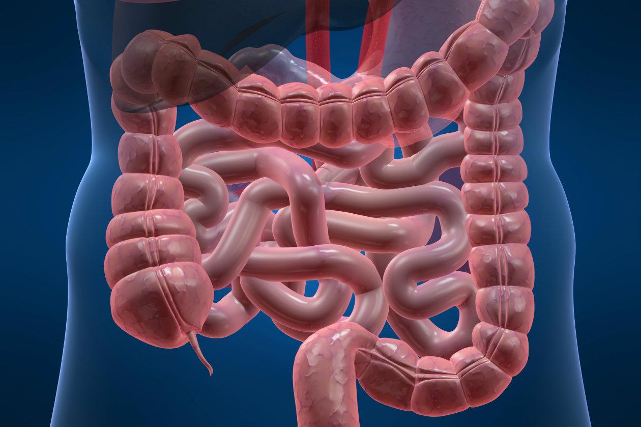 Tránsito intestinal
