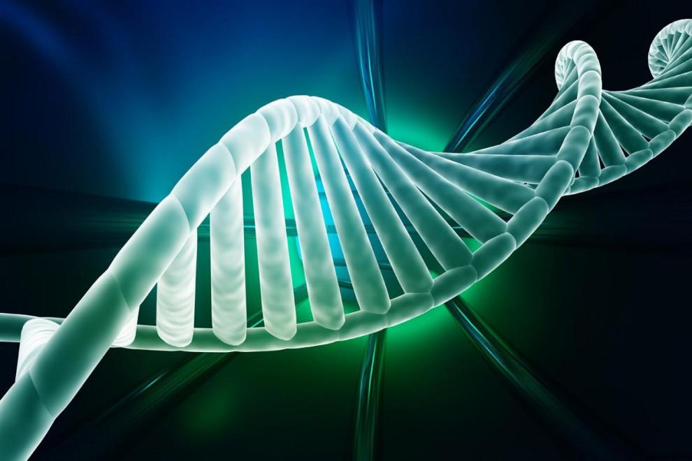 Tipos ADN