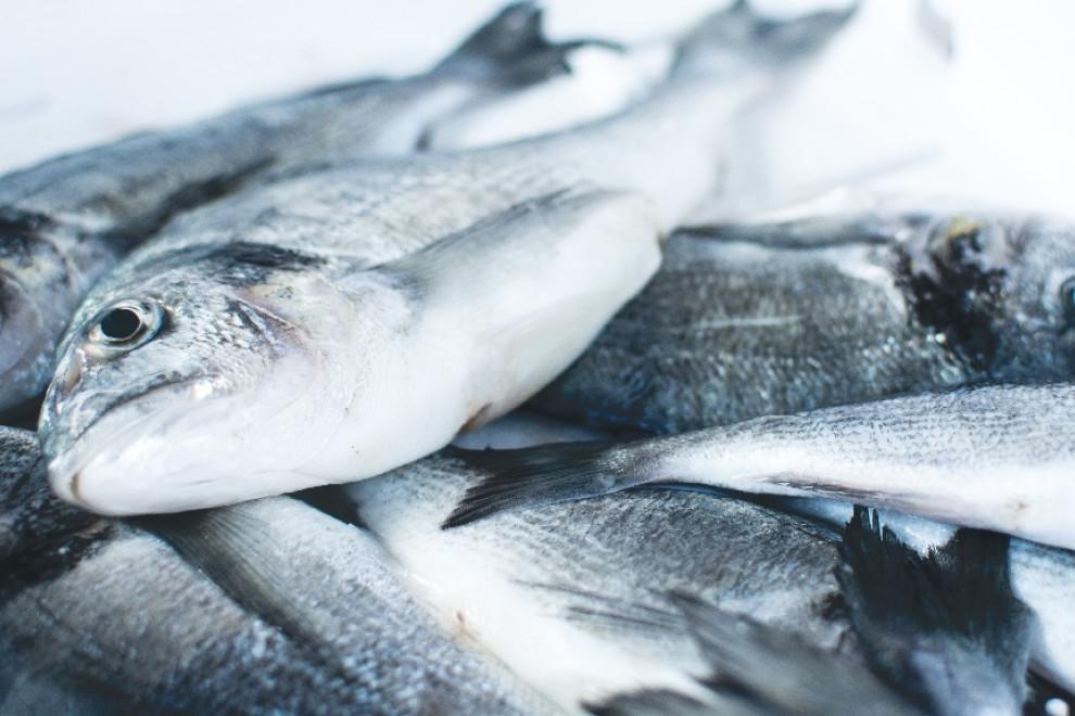Pescado azul y blanco