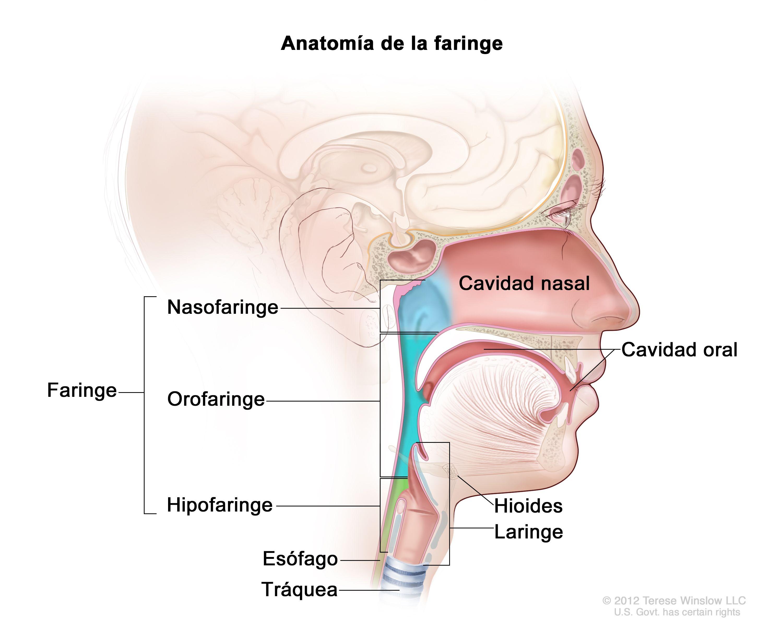 Qué es faringitis
