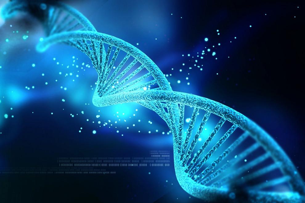 Diferencias genotipo fenotipo