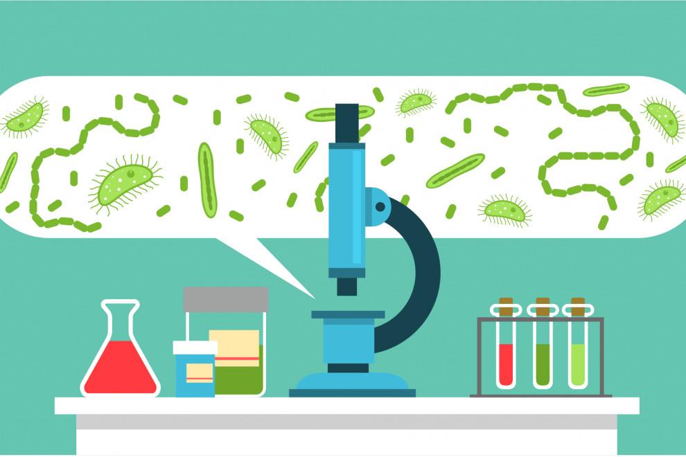 Ramas Microbiología