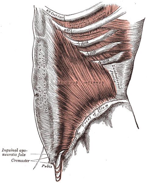 Músculo oblicuo interno abdominal