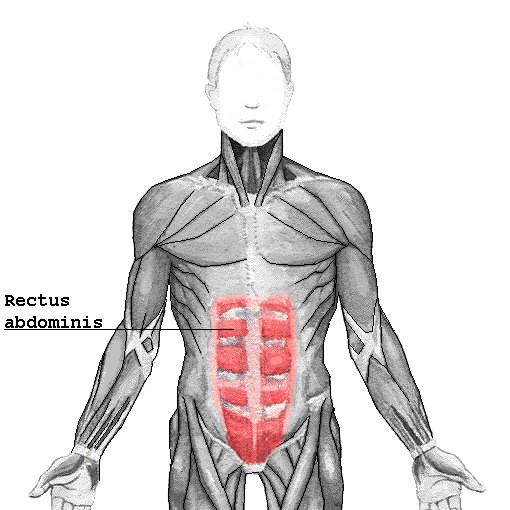 Músculo recto abdominal
