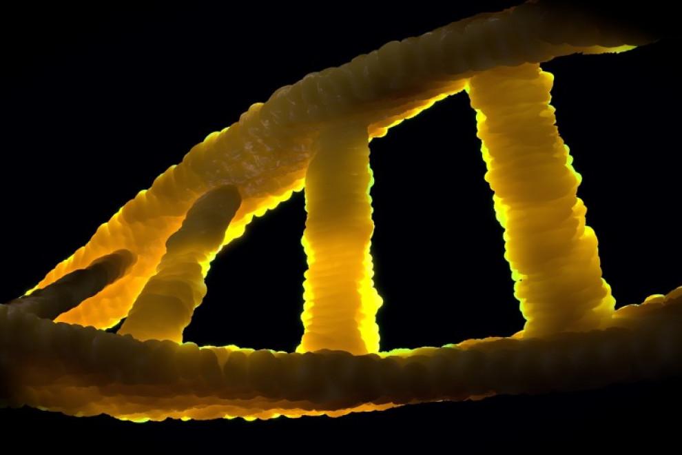 Diferencias ARN ADN