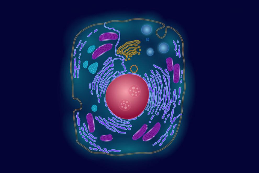 Diferencias tumor benigno y maligno