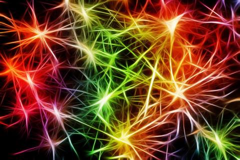 Los 8 tipos de inteligencia según Gardner (y en qué consisten)