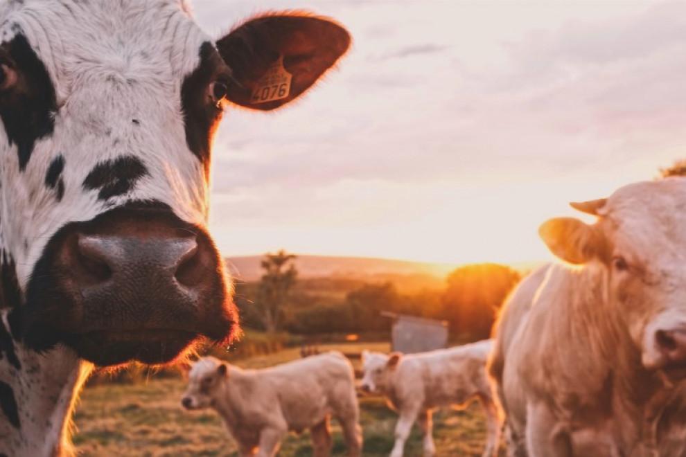 Mejores marcas de leche en España