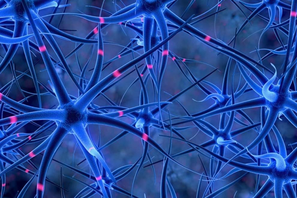 Tipos de células nerviosas