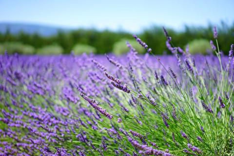 Las 15 plantas medicinales con más propiedades y beneficios