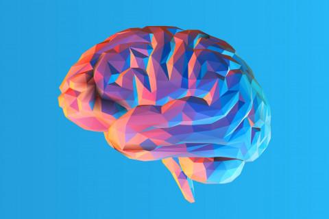 Noradrenalina neurotransmisor